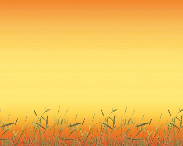 PAPEL MANILA DISENO 16YDS PRAIRIE GRASS